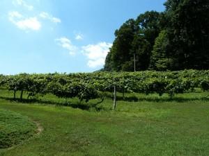 Rainbow Hills Wine Grapes