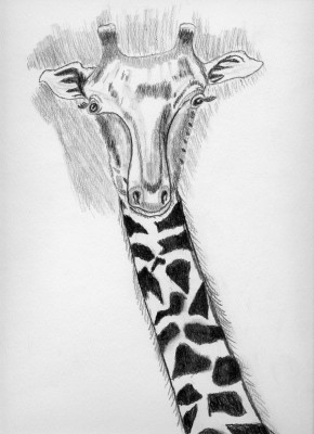 Giraffe-blog