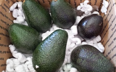 Life Long Passion for Food Part 8: Avocados