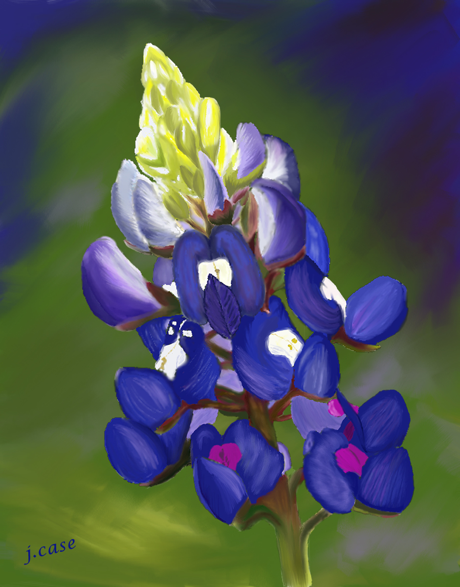A Bluebonnet Love